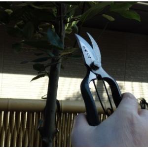 おもてなしギフト 剪定鋏 山形打刃物 工藤製鋏所の山形伝統工芸品の剪定芽切鋏(7吋) omotenashigift 05