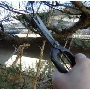 おもてなしギフト 剪定鋏 山形打刃物 工藤製鋏所の山形伝統工芸品の松葉切鋏(230mm) omotenashigift 05