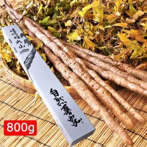 自然薯 大山 800g(1本〜2本)+押し麦付 ディオスコリン含有|omotesando-club