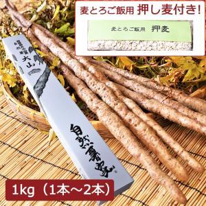 自然薯 大山 1kg(1本〜2本)+押し麦付 ディオスコリン含有(お歳暮のし対応可)|omotesando-club