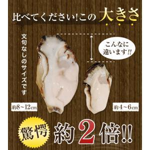 セール あすつく 広島県産2L特大400g牡蠣鍋2-3人前セット 複数購入で牡蠣1.8キロ カキ ギフト お歳暮 海産鍋 名産 特産品 訳あり|once-in|04