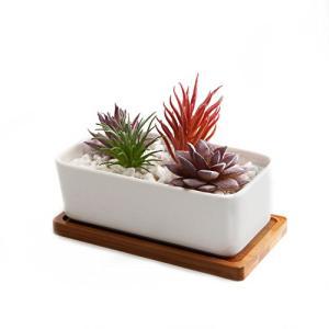 T4U 16.5CM 陶器鉢 白 矩形 植木鉢 多肉植物 サボテン鉢 竹トレイ付き|once20200619