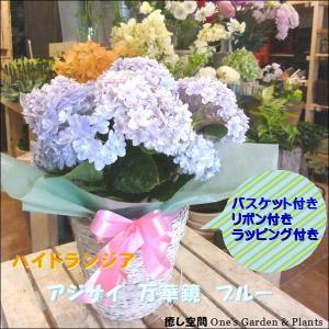 【母の日 ギフト特集】 アジサイ 万華鏡 ブルー(マンゲキョ...