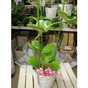 テレビの横やデスクや下駄箱に飾ればちょっと素敵♪ これから観葉植物を楽しむ方へ♪ 愛してる人にも♪お...