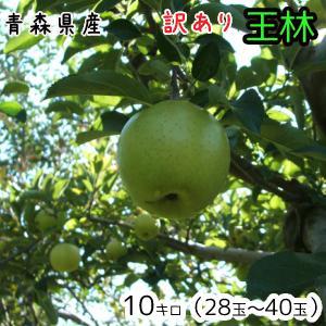 青森りんご☆送料無料☆訳ありりんご王林10キロ28〜40玉 ...