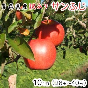青森りんご 送料無料 訳ありりんごサンふじ10kg(10キロ...
