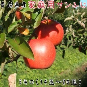 青森りんご 送料無料 家庭用サンふじ5キロ14〜20玉  発送は11月22日頃から