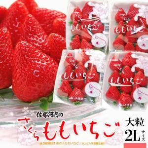 さくらももいちご(220g×4P)徳島県佐那河内産 桃苺 イチゴ 苺 送料無料 お歳暮