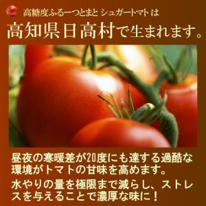 シュガートマト(約700g)高知県日高村産 フルーツトマト 送料無料|ookiniya|02
