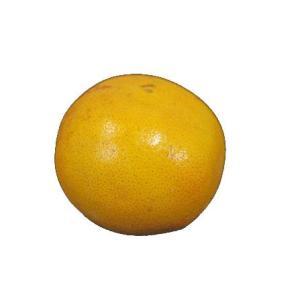 グレープフルーツ(ルビー)1玉 【フロリダor南アフリカ】|ootsuru