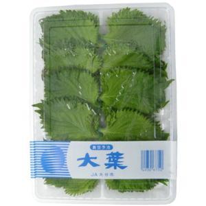 九州産 大葉(おおば・青じそ・ジソ・しそ) 100枚入り 1パック 九州の安心・安全な野菜! 【九州・大分産】