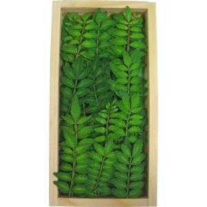 木の芽(きのめ) 山椒の葉 国産 1パック