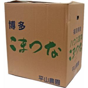 【箱売り】 小松菜(こまつな) 1箱(20袋入り/約4kg) 福岡産 【業務用・大量販売】