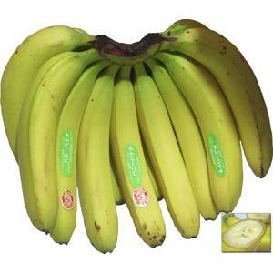 ハニーバナナ 1房(約2.2kg) エクアドル産 スムージーにピッタリ!送料無料!!【バナナ】