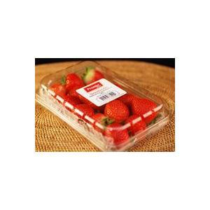 ストロベリー(いちご・イチゴ・苺) 1パック 約15玉入り  【アメリカ産】