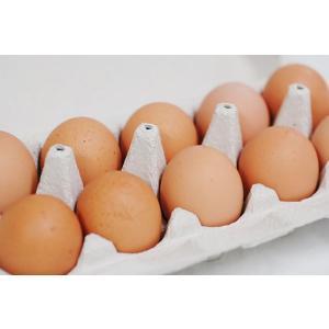 【卵】 九州産 輝黄卵 (玉子・たまご・卵・タマゴ) 10玉パック 福岡産・九州産 九州 たまご|ootsuru