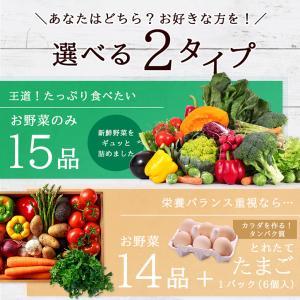 【あすつく】【セット】 おまかせ 九州野菜セット 15品 旬の野菜詰め合せ・おまかせ詰め合わせセット!西日本 【送料無料】|ootsuru|02