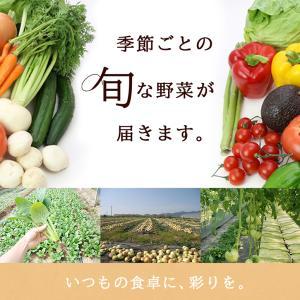 【あすつく】【セット】 おまかせ 九州野菜セット 15品 旬の野菜詰め合せ・おまかせ詰め合わせセット!西日本 【送料無料】|ootsuru|05