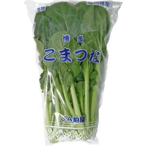 九州産 野菜 小松菜(こまつな・コマツナ) 骨を丈夫に! 1袋  約200g  九州の安心・安全な野菜! 【長崎・福岡・九州】|ootsuru