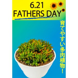 父の日 プレゼント ハオルチア 「五重の塔」 ギフト|orandaya4