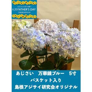 父の日 プレゼント あじさい 紫陽花 アジサイ 6月の花ギフト|orandaya4