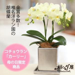 【母の日 対応商品】 胡蝶蘭クローム鉢 (カーリー) オランダ屋|orandaya4