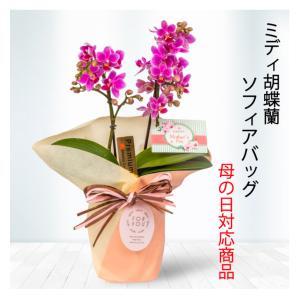 【母の日 対応商品】  胡蝶蘭 ランラン花柄鉢観葉寄せ オランダ屋|orandaya4
