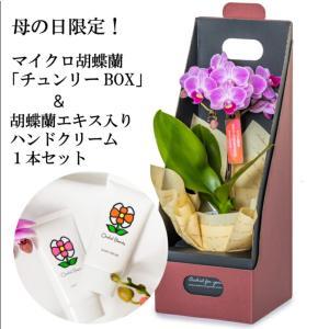 【母の日 対応商品】 チュンリーマイクロ胡蝶蘭 オランダ屋|orandaya4