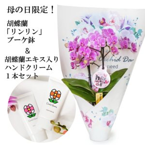 【母の日 対応商品】  胡蝶蘭 リンリン ブーケ鉢オランダ屋|orandaya4