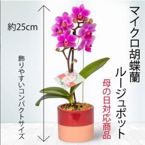 【母の日 対応商品】  母の日ギフト マイクロ胡蝶蘭 クロエ鉢 オランダ屋|orandaya4