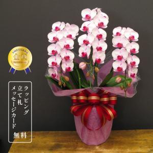 モテギ洋蘭園の胡蝶蘭彩3本立ち 花数が多く、花持ちが良い胡蝶蘭です。 ラン、胡蝶蘭陶器鉢植え・ピンク...