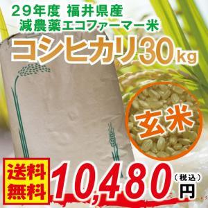 【福井県産 玄米】29年度 コシヒカリ 30kg 無化学肥料...