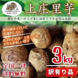 上庄里芋 訳有り(形がいびつ・外皮に傷・サイズが小さい等) 3kg 送料無料 福井県産