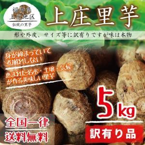 上庄里芋 訳有り(形がいびつ・外皮に傷・サイズが小さい等) 5kg 送料無料 福井県産