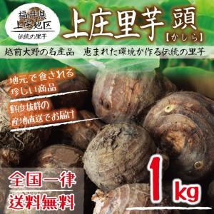 上庄里芋 頭(かしら) 1kg 送料無料 福井県産