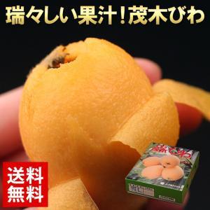 送料無料 長崎 茂木びわ約500g 化粧箱入り ビワ 枇杷 フルーツ 旬 果物(gn)
