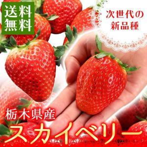 送料無料 栃木県産いちご スカイベリー 約280g×2パック イチゴ(gc)