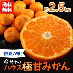 送料無料 ハウス極甘みかん 13〜22玉 約2.5kg ハウ...