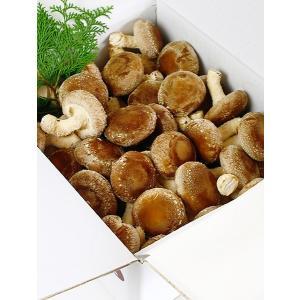 菌床栽培 肉厚 生椎茸 濃厚な香り 米原産 クオリティの生しいたけ 1.5kg|orite