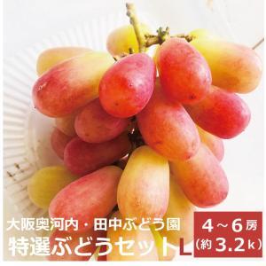 奥河内(大阪府の南東部)の田中ぶどう園は、木につけたまま完熟させたぶどうをその日の朝に収穫し、発送を...