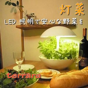 LED水耕栽培器 灯菜 シンプルモダンな丸型の灯菜 terrara|osawamarine