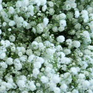 花束に追加するカスミ草|osonaehana