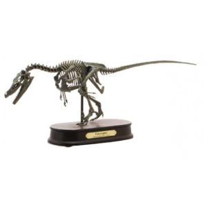 ダイナソー スケルトンモデル(DINOSAUR SKELETONMODEL) 恐竜 ヴェロキラプトル FDS606(70106)|otafuku