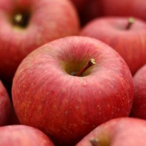 しのぶの里のおいしいリンゴ 家庭用訳ありリンゴ 5kg|otakajuen