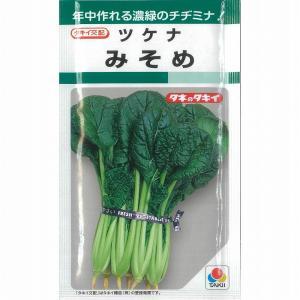 【その他の菜類】ツケナ みそめちぢみ菜〔タキイ交配〕/小袋
