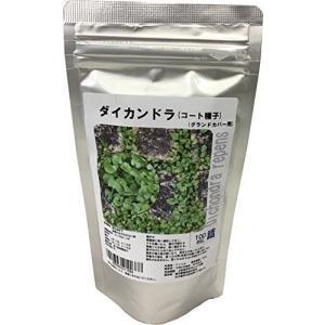 福花園種苗 ダイカンドラ種子(コート種子)100mL詰 (グランドカバー用)|otc-store