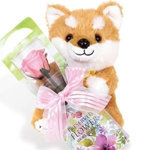 【 liLYS ?pice 】 リリスエピス プリザーブドフラワー 柴犬 ぬいぐるみ 一輪の薔薇 プレゼント 母の日 お祝い 記念日 誕生日|otc-store