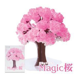 マジック桜 Magic桜 お祝い プレゼント エア花見  インドア花見 記念|otogino