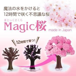 マジック桜 Magic桜 お祝い プレゼント エア花見  インドア花見 記念|otogino|03