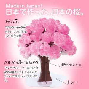 マジック桜 Magic桜 お祝い プレゼント エア花見  インドア花見 記念|otogino|04
